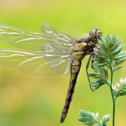 A Dragonfly by Any Other Name